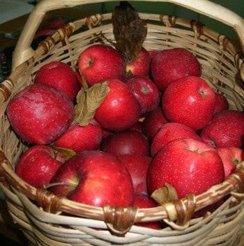 foto florina rossa mela