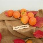 fm_kaki_rojo_brillante pianta di cachi in vendita online su AnticoPomario