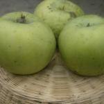 frutti-antichi-Melo-Renetta-Walder dalmonte anticopomario alberi di mele in vendita online
