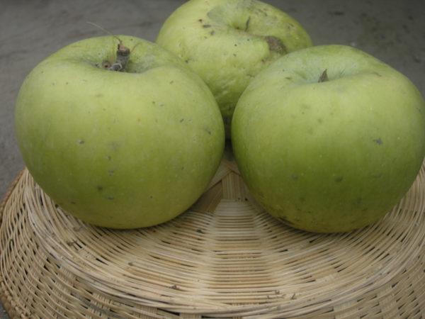 frutti-antichi-Melo-Renetta-Walder