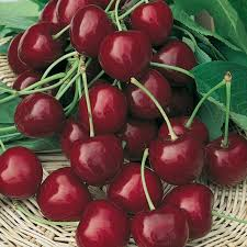 Foto frutti ciliegie Burlat