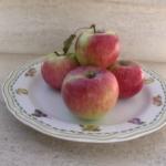 melo commercio piante da frutto in vendita online