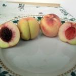 _pesca_dei_santi_ Piante da frutto in vendita online
