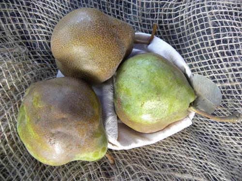 pera-mora-di-faenza piante da frutto online pero albero di pere pianta di pere antiche