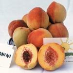Pesco limonini_piante da frutto in vendita online