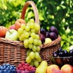 Piante da frutto freschezza d'estate in vendita online Anticopomario mele pere uva da tavola lamponi mirtilli pesche susine albicocche in vendita online