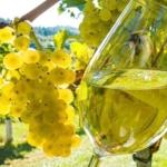 Sauvignon Blanc 1 Uva da vino rossa Barbatelle AnticoPomario Dalmonte vivai viti