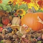offerta sapori d'autunno pro Anticopomario Dalmonte Vivai piante da frutto online castagni mele pere piante da frutto noci