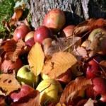 offerta sapori di bosco Anticopomario Dalmonte Vivai piante da frutto online varietà antiche in un giardino mediterraneo agricoltura sostinibile biodiversità della frutta estiva