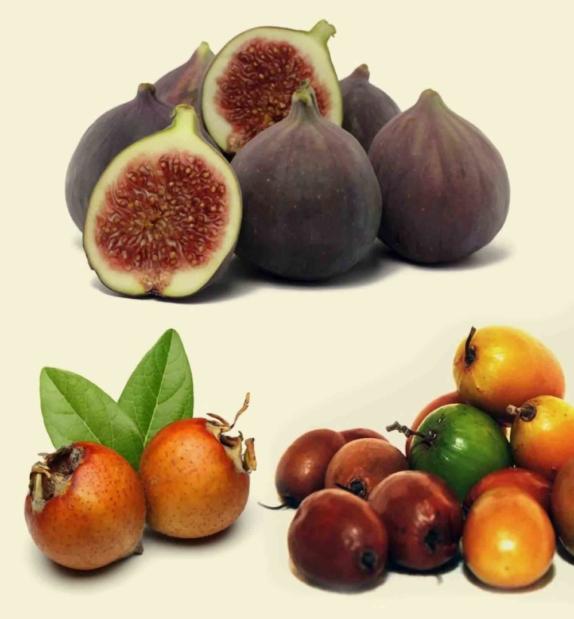 Specie da riscoprire acquista piante online. Scopri gli alberi da frutto dimenticati su AnticoPomario